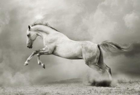 baltais-zirgs
