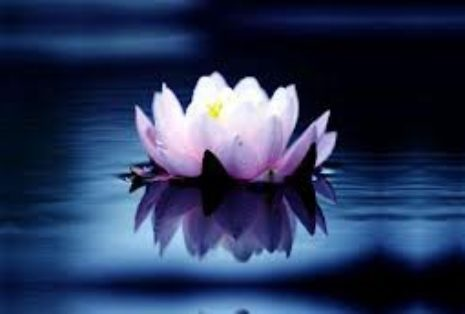 natureza coração lotus